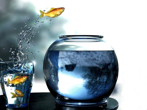 peces_acrobatas-1024x768